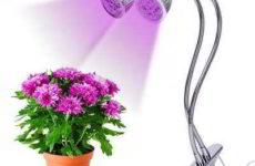 Освещение необходимое для комнатных растений
