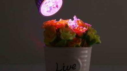 Как важно для комнатных растений освещение