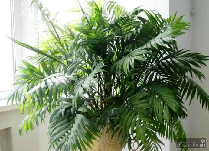 растения для спальни и детской