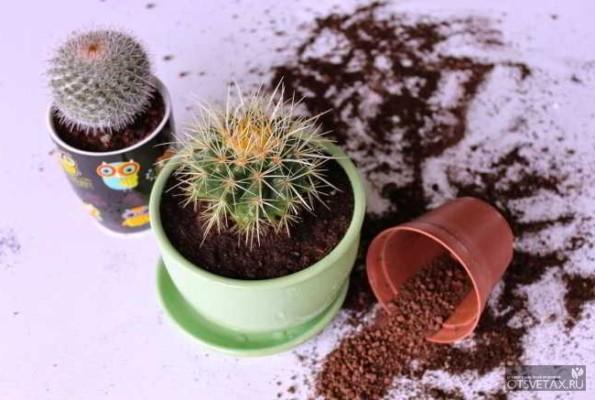 кактусы виды фото с названиями скачать бесплатно