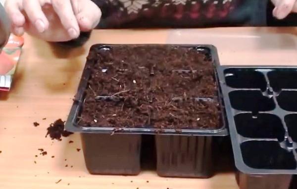 рассада помидор выращивание