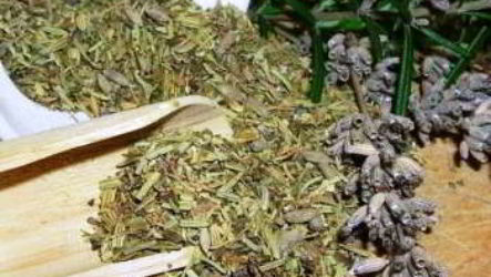 Пустырник трава лечебные свойства, противопоказания, применение