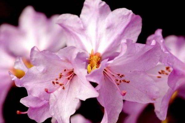 Комнатные цветы и название гербера 84