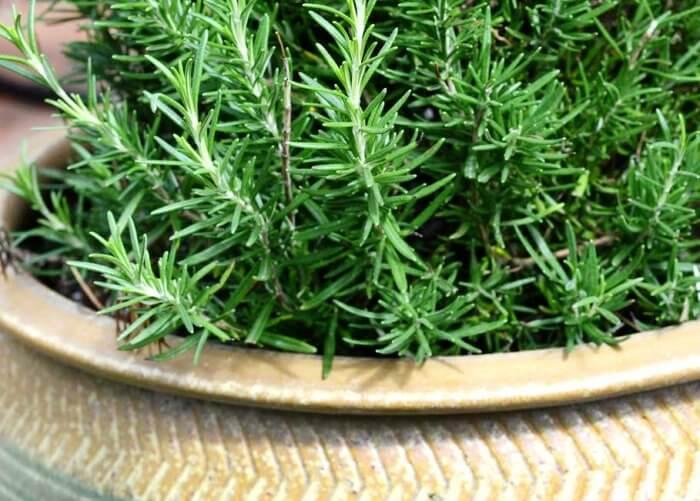 растения для спальни фото