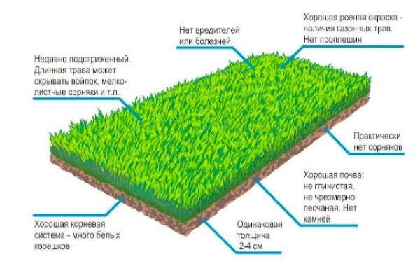 как сажать газонную траву семенами весной