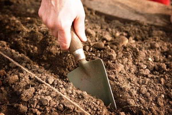 обработка почвы после чеснока Баллон Без рукавов