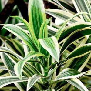 Топ 7 — самые легкие в уходе комнатные растения