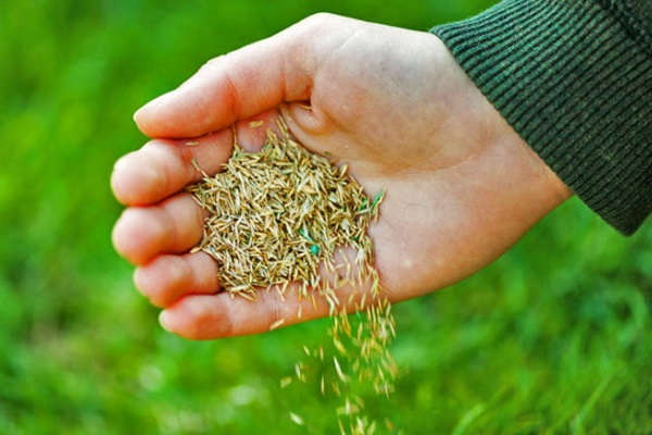 как праивльно сажать газонную траву видео