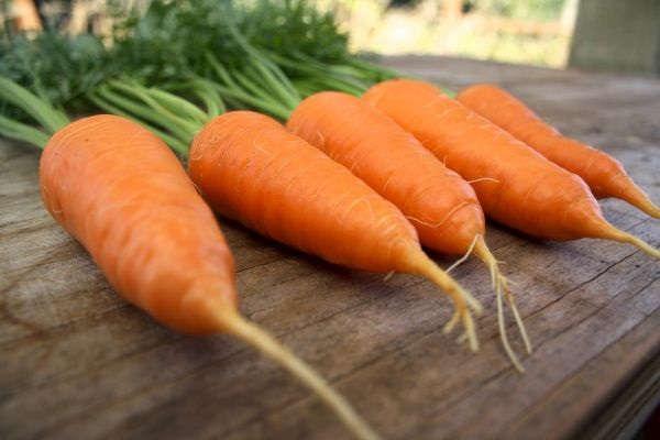 посадка моркови осенью под зиму в башкирии