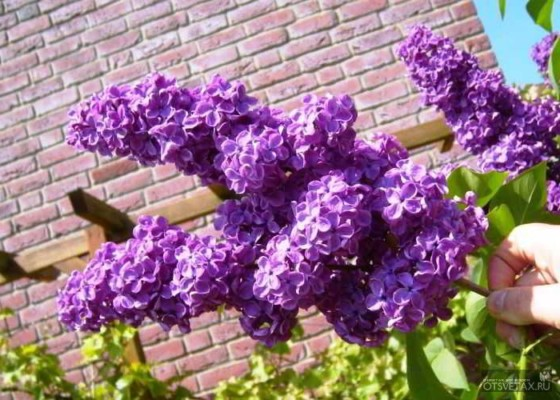 какие цветы саджают осенью на даче