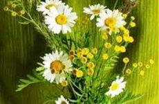 Современная флористика, композиции из цветов, флористические стили