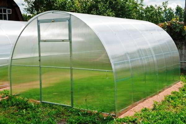 теплица выращивание помидор