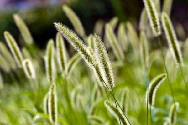 как сажать газонную траву видео