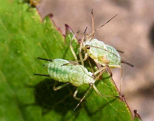 инсектициды для комнатных растений без запаха