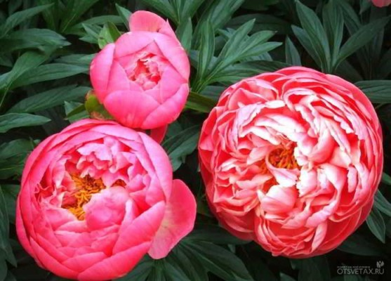 какие цветы сажают осенью на даче для цветения весной и летом youtube