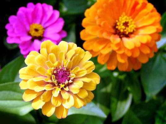какие цветы сажать в марте на рассаду