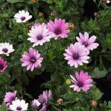 комнатные цветы цветущие фотографии