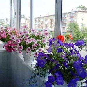 Какие цветы можно выращивать на балконе прогреваемом до температуры 40 градусов