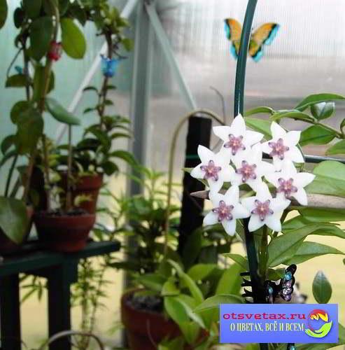 комнатные цветы в интерьере квартиры фото