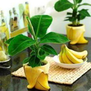 Удобрение из банановой кожуры для комнатных растений рецепты приготовления