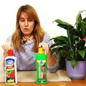 Как выбрать удобрение для спатифиллума, пропорции, периодичность подкормок