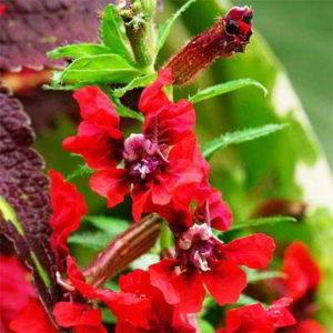 Какой уход нужен комнатным растениям осенью