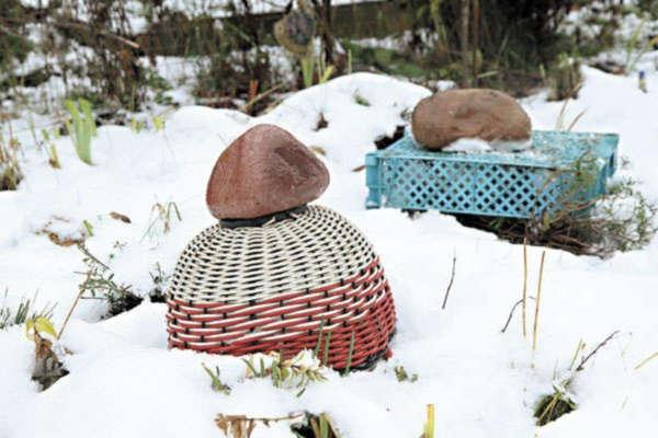 укрытие розы на зиму на даче