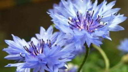 Какие цветы нужно сажать осенью под зиму