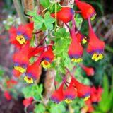 вьющиеся растения для сада фото и названия уход