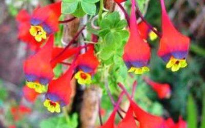 Названия и фото вьющихся растений для сада