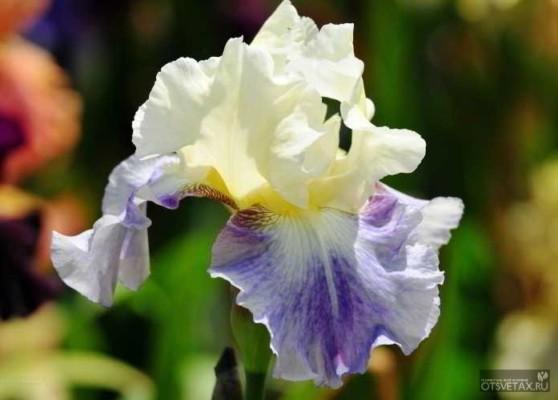 какие цветы сажают осенью для цветения весной и летом