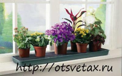 Основные группы комнатных растений по характеристике с фото и названием