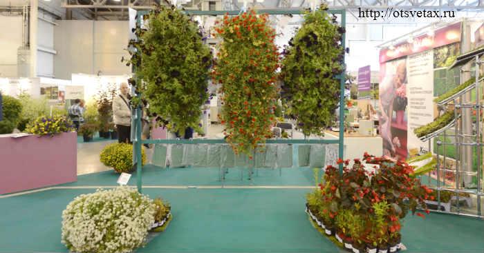 выставка цветов +в москве 2012