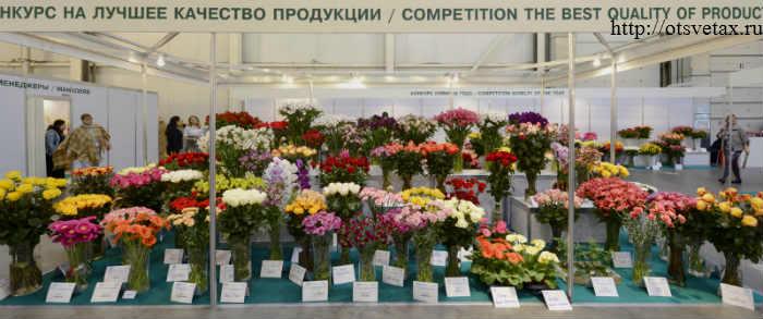 выставка цветов видео