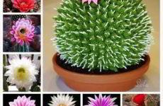 Как правильно выбрать и купить кактус для дома