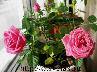 цветы свет +и радость