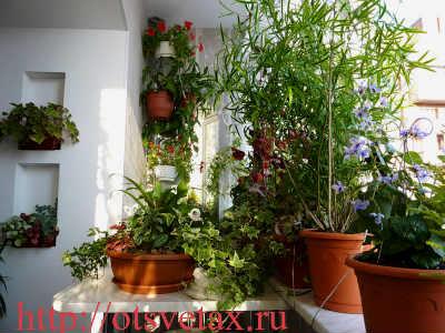 какие цветы +на балконе