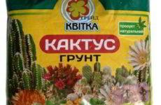 Грунт для кактусов – каким он должен быть? Купить или сделать своими руками?