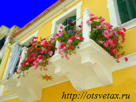душистый горошек +на балконе фото