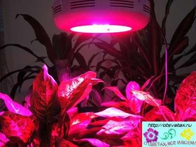 освещение для растений своими руками