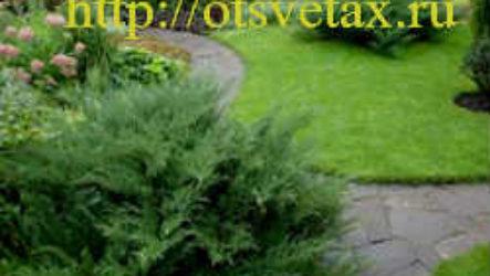 Как осуществить озеленение дачного участка