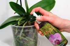 Подкормка орхидей