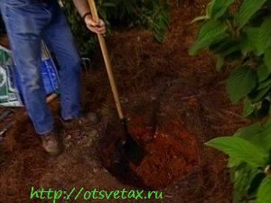 как правильно садить кустарники