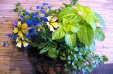 """Фотоконкурс """"Цветы в моём доме»"""