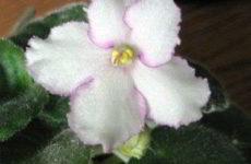 Комнатные цветы – мои цветущие любимцы