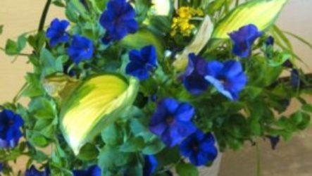 Цветы – отдушина моей жизни!
