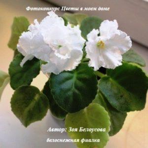 """Онлайн голосование фотоконкурса """"Цветы в моём доме"""" открыто! (продолжение)"""
