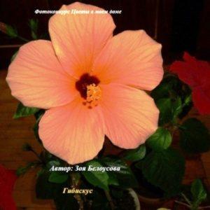 """Онлайн голосование фотоконкурса """"Цветы в моём доме"""" открыто!"""