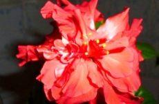 """Онлайн голосование фотоконкурса """"Цветы в моём доме"""" требует завершения!"""