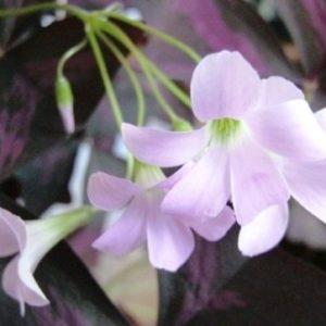 Цветы – моя любовь, моя жизнь, моя радость
